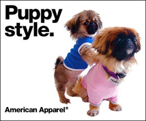 Advertising American Apparele, Ryan Holiday, Marketing Forum, Performance Strategies